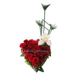 ORQ090 – Orquídeas